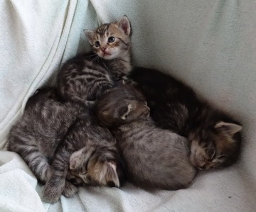 baby-cats-955895_640