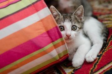 cat-3068896_640