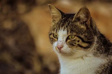 cat-3069979_640