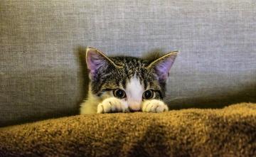 kitten-2558459_640