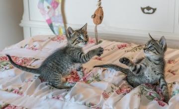 kittens-1534083_640