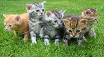 kittens-555822_640